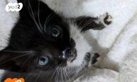 תוספת חתולים | חיות מחמד יד2 DD-03