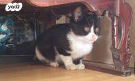 מאוד חתולים | חיות מחמד יד2 YI-09