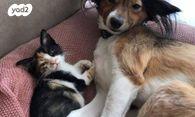 עדכני חתולים | חיות מחמד יד2 IV-17