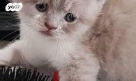 ניס חתולים | חיות מחמד יד2 XE-11