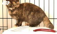 להפליא חתולים | חיות מחמד יד2 AI-84