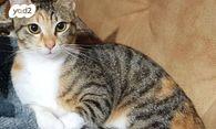 למעלה חתולים | חיות מחמד יד2 RH-83