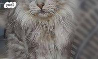 מודרני חתולים | חיות מחמד יד2 YQ-61