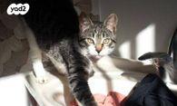 מתקדם חתולים | חיות מחמד יד2 SA-32