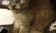 מודרניסטית חתולים | חיות מחמד יד2 YP-65