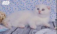 מדהים חתולים | חיות מחמד יד2 YY-86