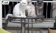 שונות חתולים | חיות מחמד יד2 NI-27